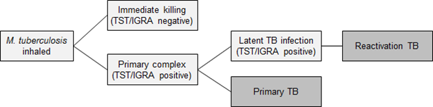 This charge shows the stages of tuberculosis. It begins with M. tuberculosis inhaled. This branches into either immediate killing (TST/IGRA negative) or primary complex (TST/IGRA positive). If so, it is either primary TB or latent TB infection (TST/IGRA Positive), which leads to reactivation TB.