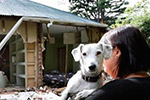 Photo of a woman with her dog, looking at a house with the walls fallen away.