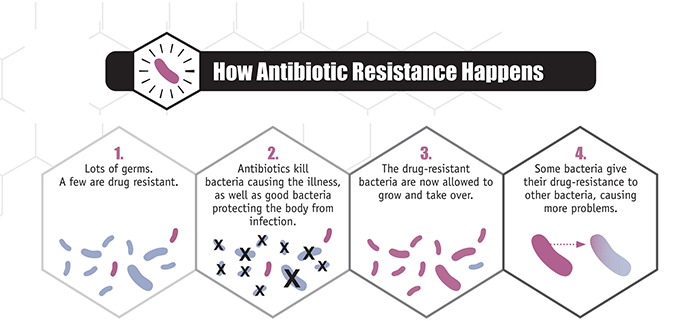 How antibiotic resistance happens. 1. Lots of germs. A few are drug resistant. 2. Antibiotics kill bacteria causing the illness, as well as good bacteria protecting the body from infection. 3. The drug-resistant bacteria are now allowed to grow and take over. 4. Some bacteria give their drug-resistance to other bacteria, causing more problems.
