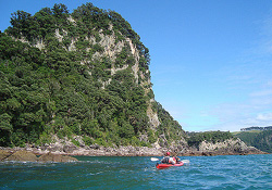 Photo of a kayaker going along a bushy coast.